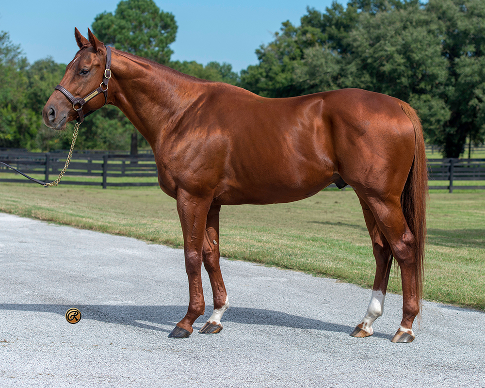 Beau Choix, won or placed in 11 stakes for four consecutive years offered by Pleasant Acres Stallions, Ocala Florida.