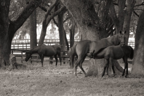 Yearling & Weanlings